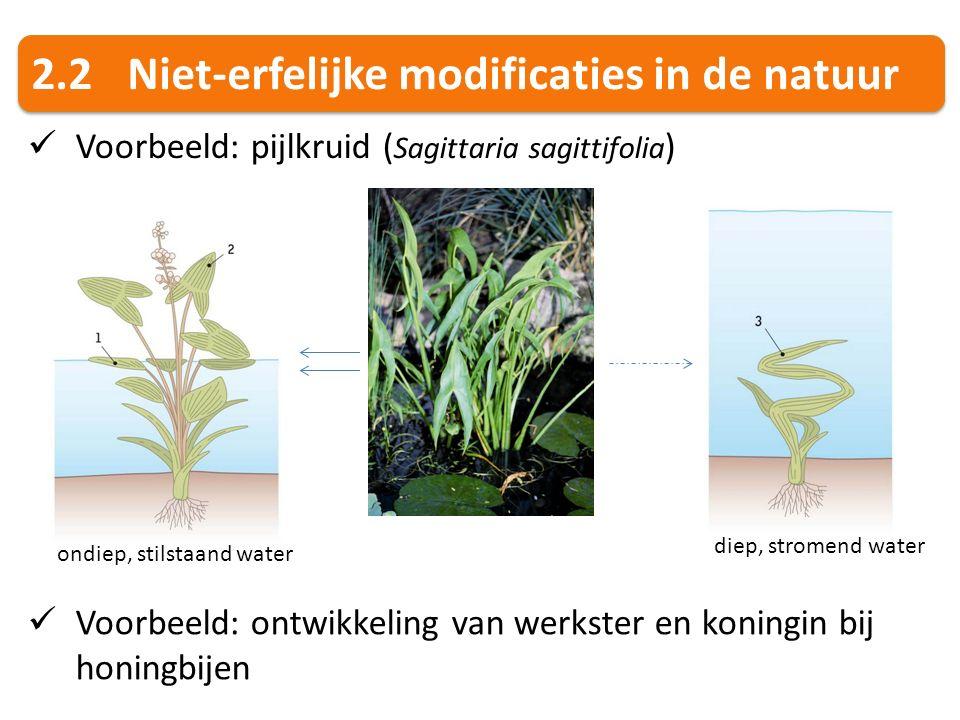 2.2 Niet-erfelijke modificaties in de natuur