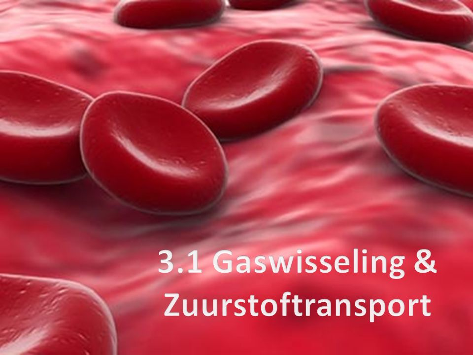 3.1 Gaswisseling & Zuurstoftransport