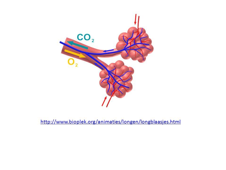 http://www.bioplek.org/animaties/longen/longblaasjes.html