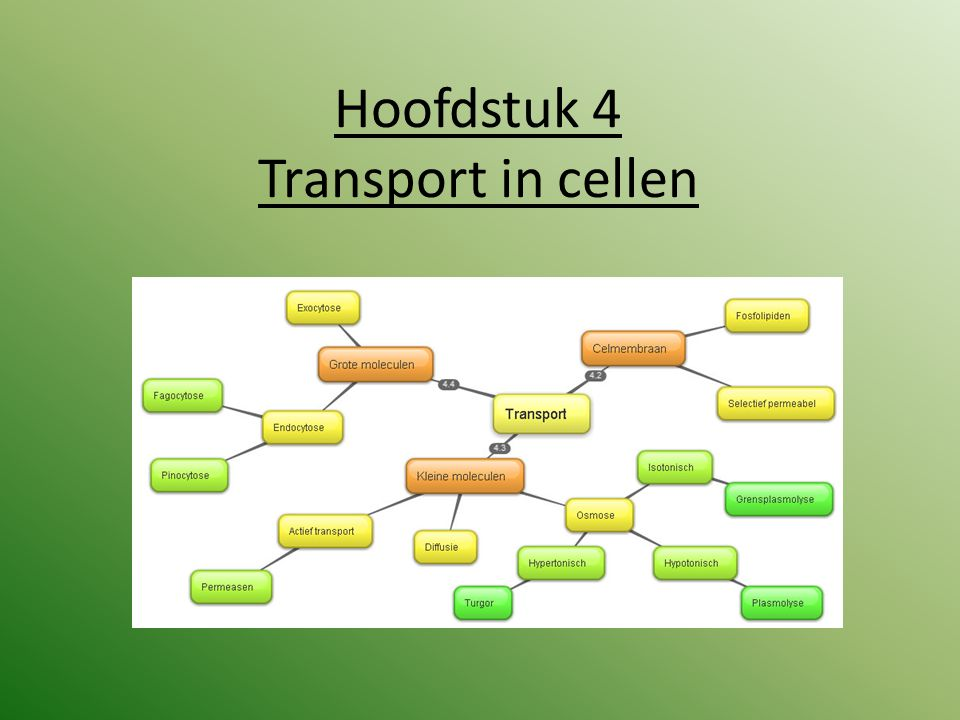 Hoofdstuk 4 Transport in cellen
