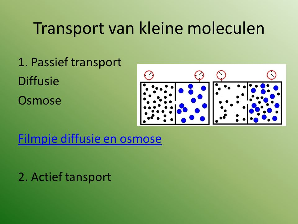 Transport van kleine moleculen