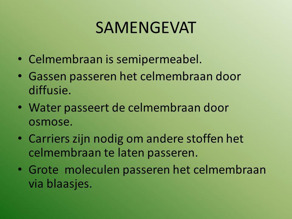 SAMENGEVAT Celmembraan is semipermeabel.