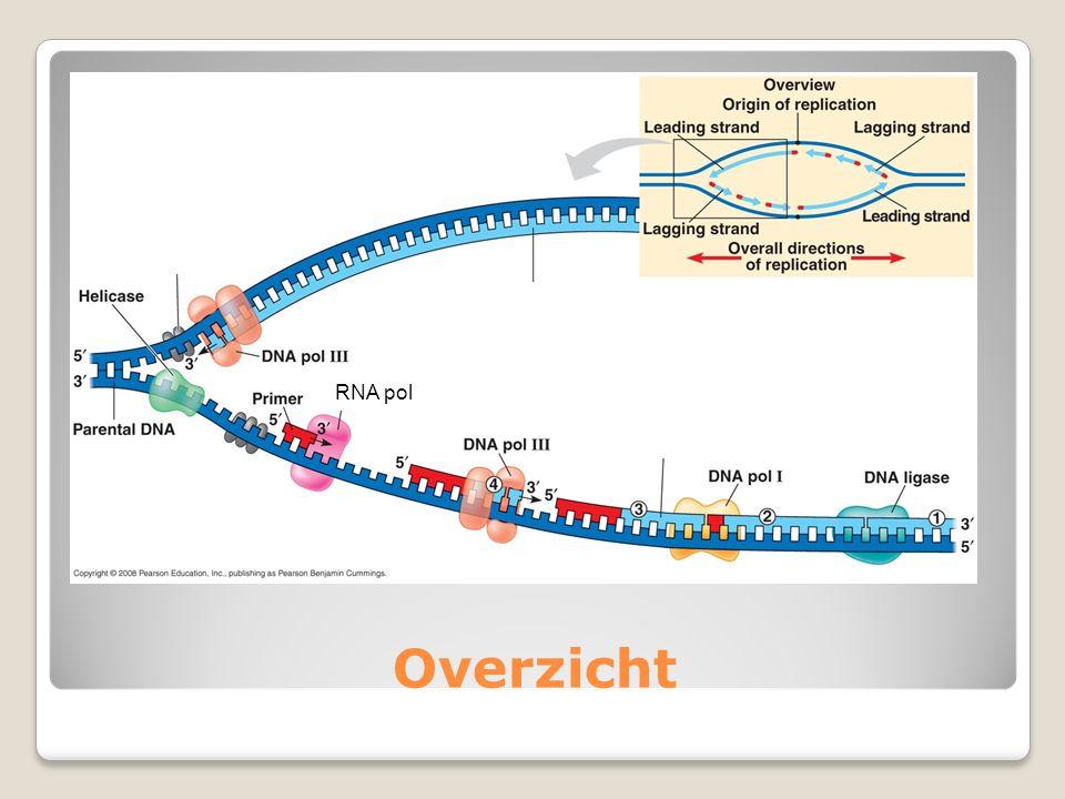 RNA pol Overzicht