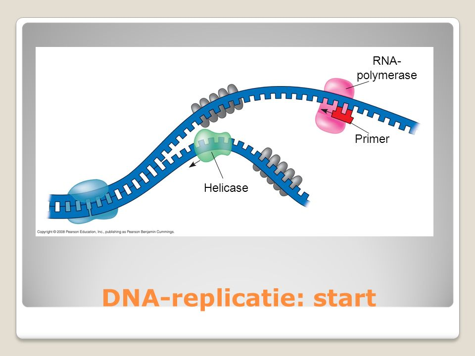 DNA-replicatie: start