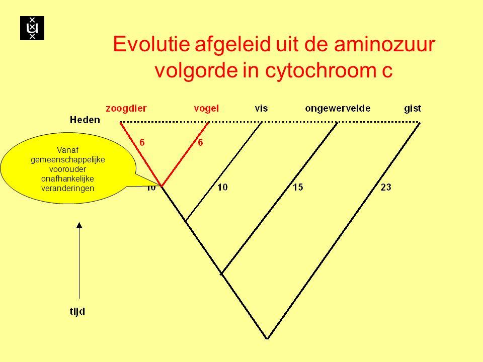 Evolutie afgeleid uit de aminozuur volgorde in cytochroom c