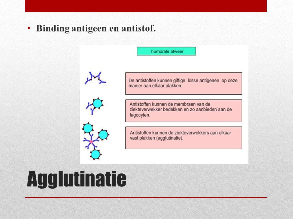 Binding antigeen en antistof.