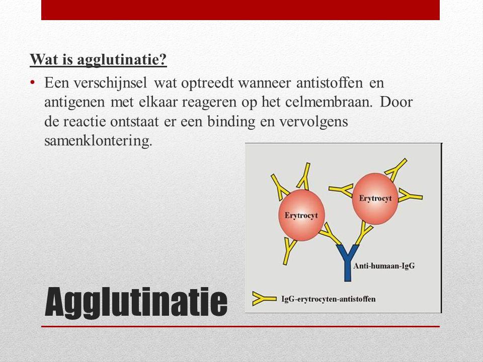 Agglutinatie Wat is agglutinatie