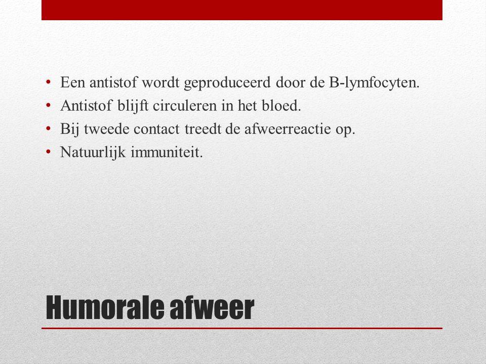 Humorale afweer Een antistof wordt geproduceerd door de B-lymfocyten.