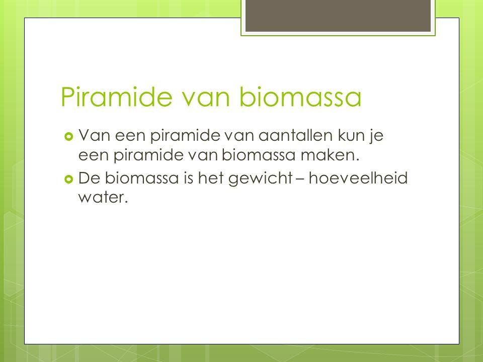 Piramide van biomassa Van een piramide van aantallen kun je een piramide van biomassa maken.