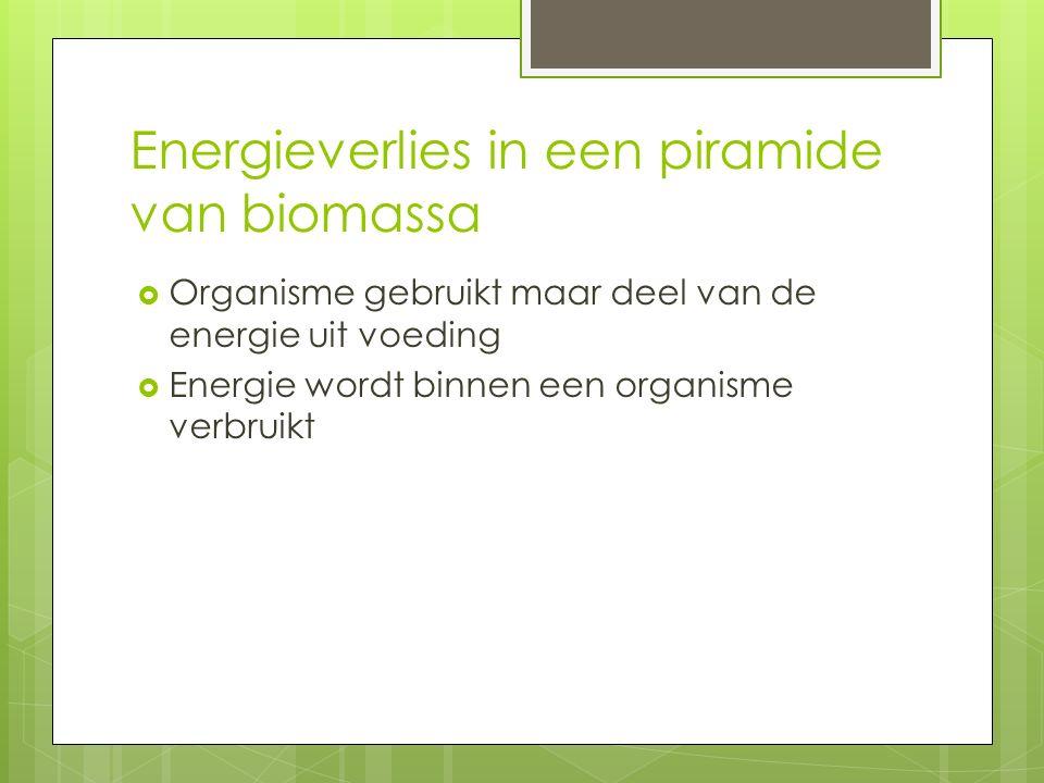 Energieverlies in een piramide van biomassa