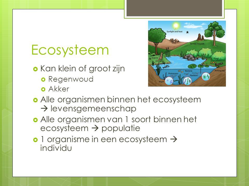 Ecosysteem Kan klein of groot zijn