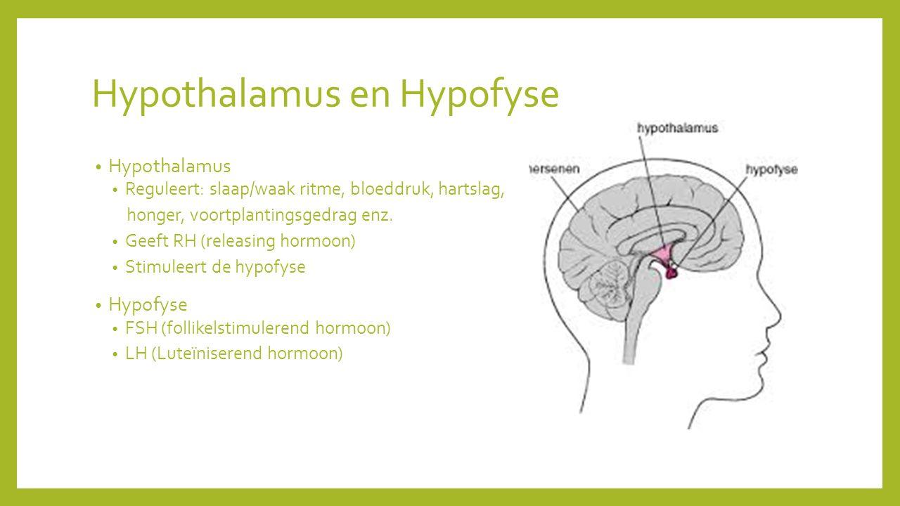 Hypothalamus en Hypofyse