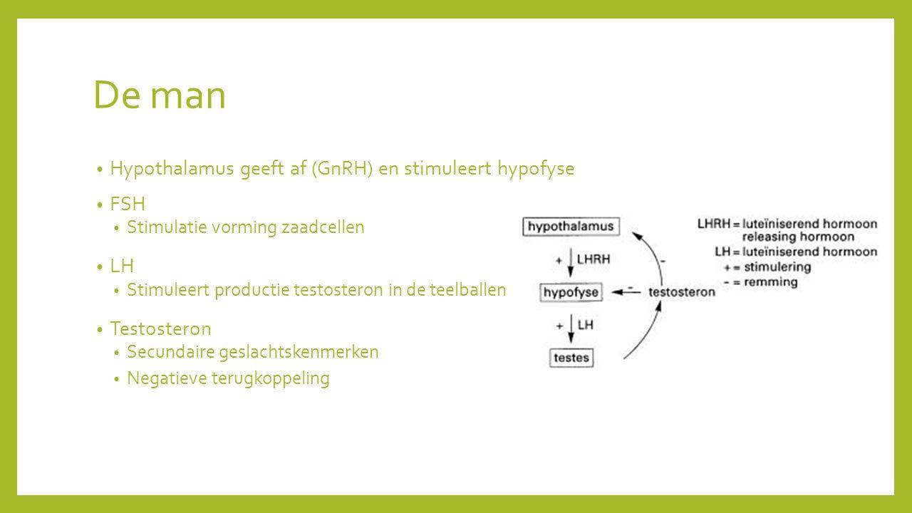 De man Hypothalamus geeft af (GnRH) en stimuleert hypofyse FSH LH