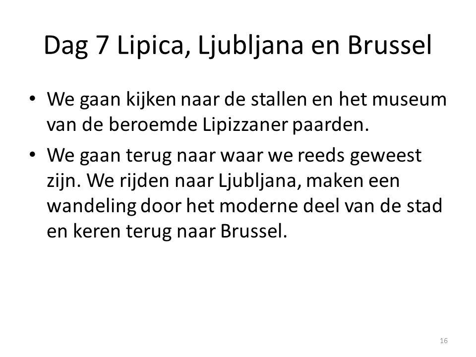 Dag 7 Lipica, Ljubljana en Brussel