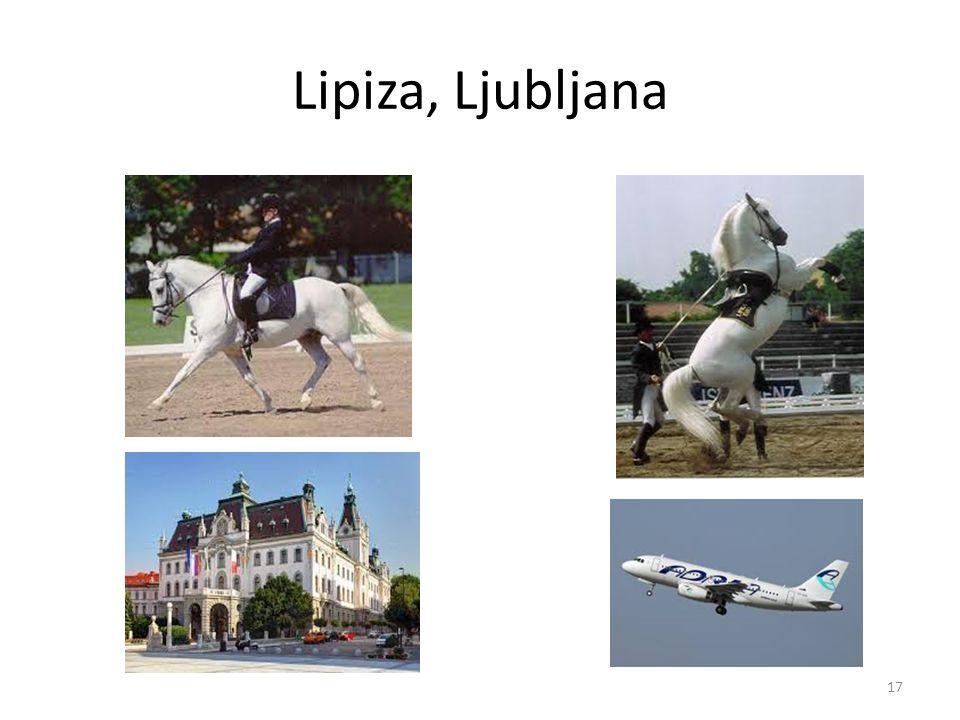 Lipiza, Ljubljana