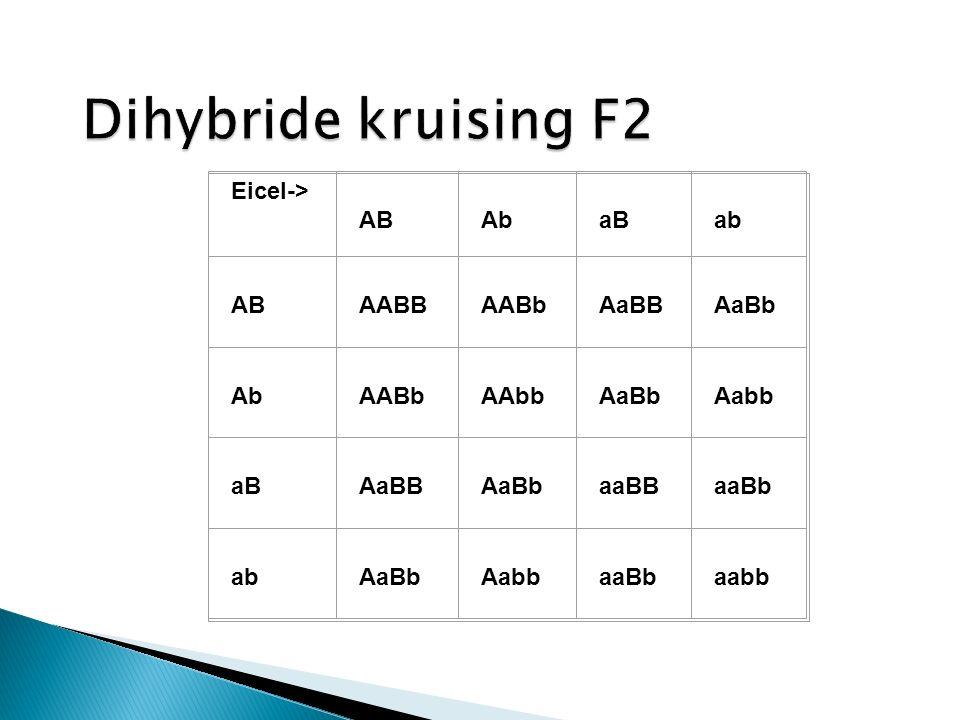Dihybride kruising F2 Eicel-> AB Ab aB ab AABB AABb AaBB AaBb AAbb
