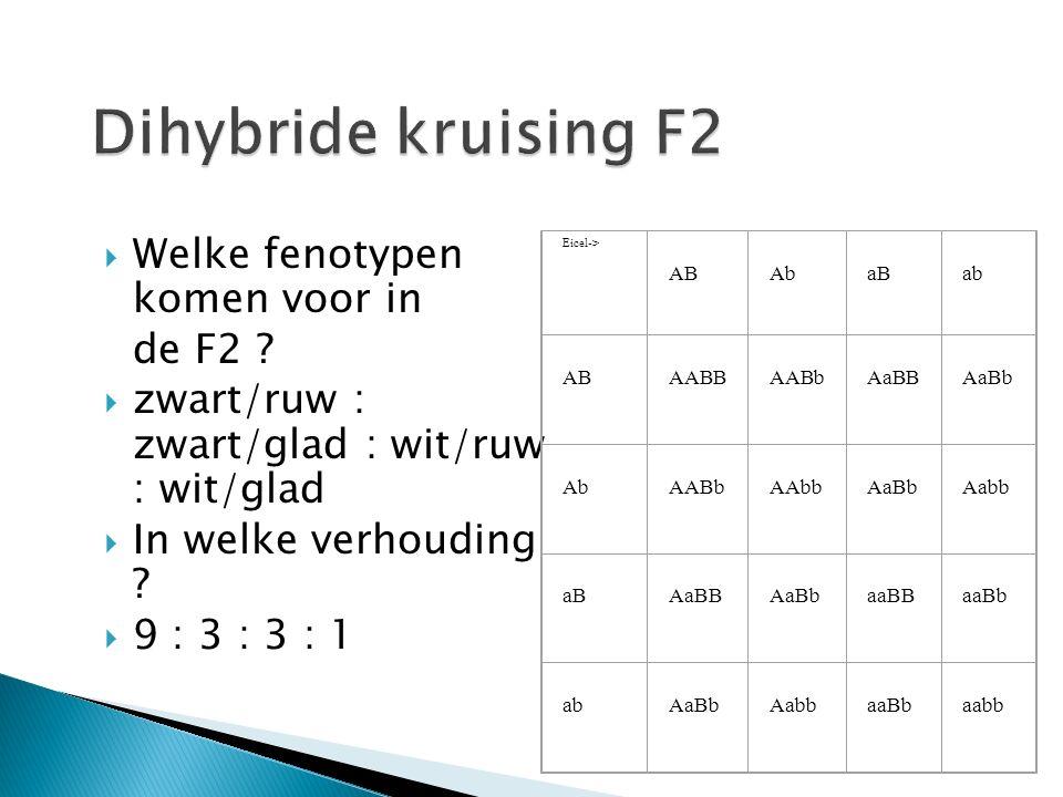 Dihybride kruising F2 Welke fenotypen komen voor in de F2