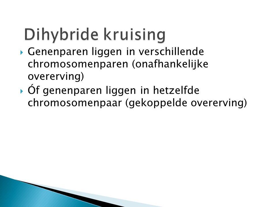 Dihybride kruising Genenparen liggen in verschillende chromosomenparen (onafhankelijke overerving)