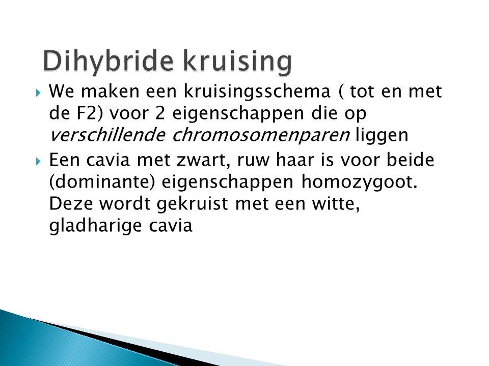 Dihybride kruising We maken een kruisingsschema ( tot en met de F2) voor 2 eigenschappen die op verschillende chromosomenparen liggen.