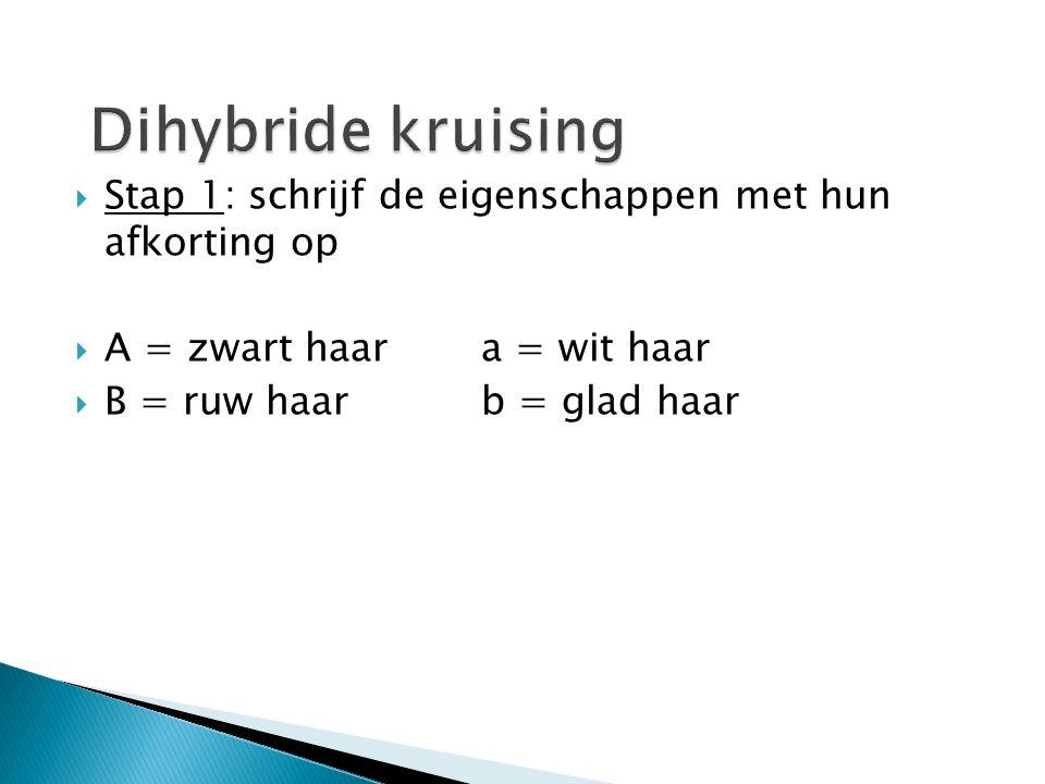 Dihybride kruising Stap 1: schrijf de eigenschappen met hun afkorting op. A = zwart haar a = wit haar.