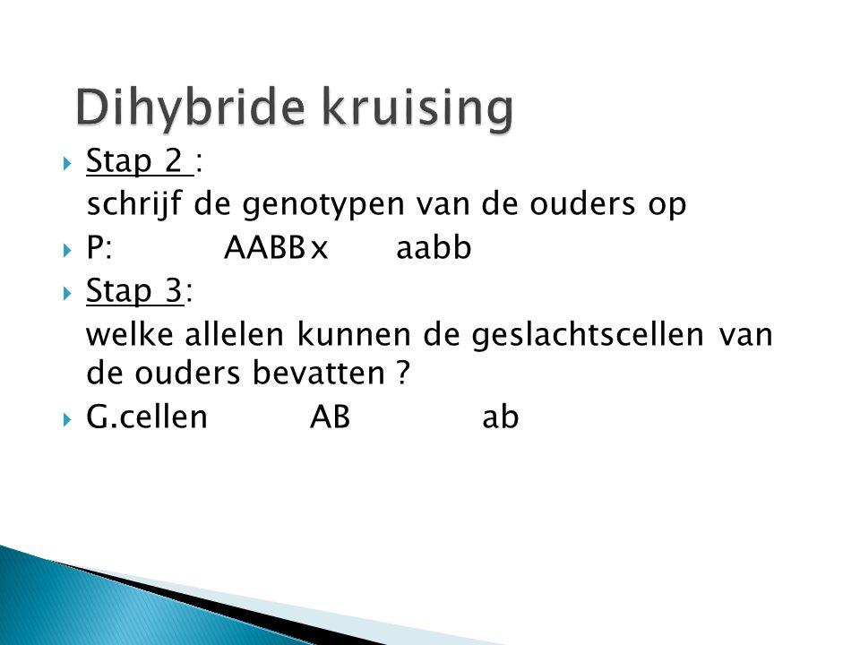 Dihybride kruising Stap 2 : schrijf de genotypen van de ouders op