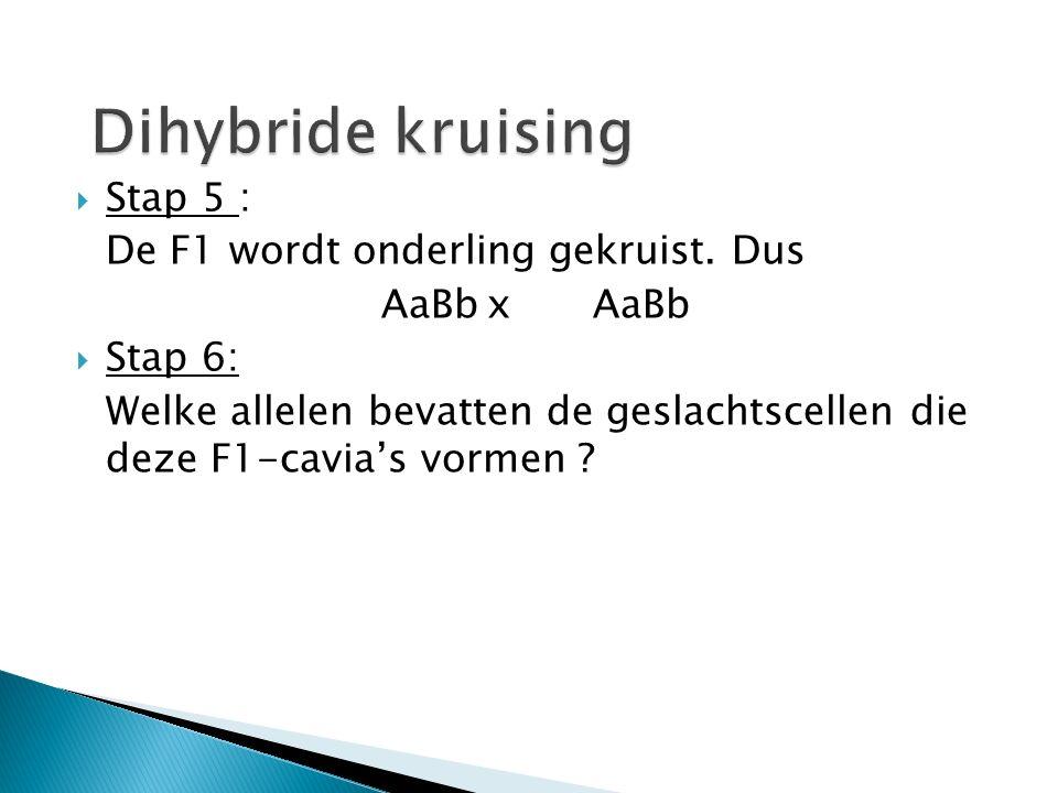 Dihybride kruising Stap 5 : De F1 wordt onderling gekruist. Dus