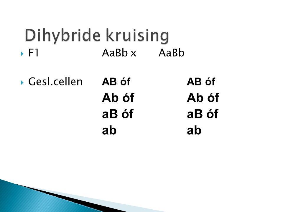 Dihybride kruising aB óf aB óf ab ab F1 AaBb x AaBb