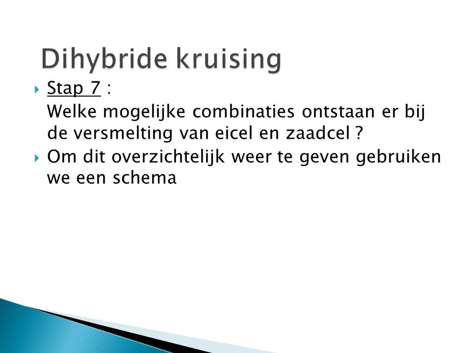 Dihybride kruising Stap 7 :