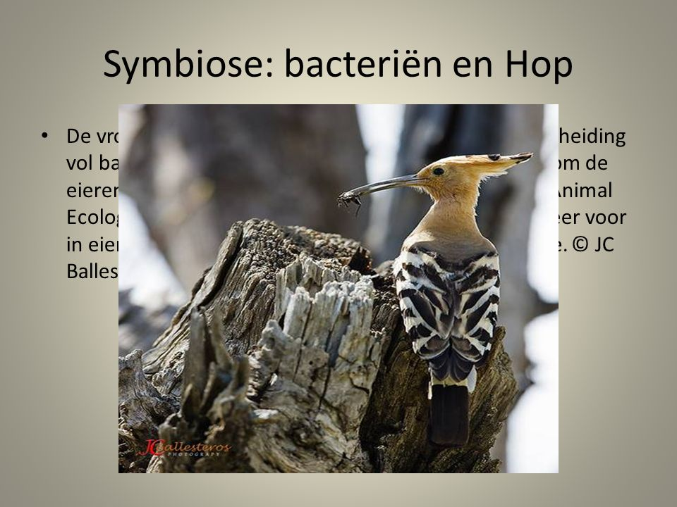 Symbiose: bacteriën en Hop
