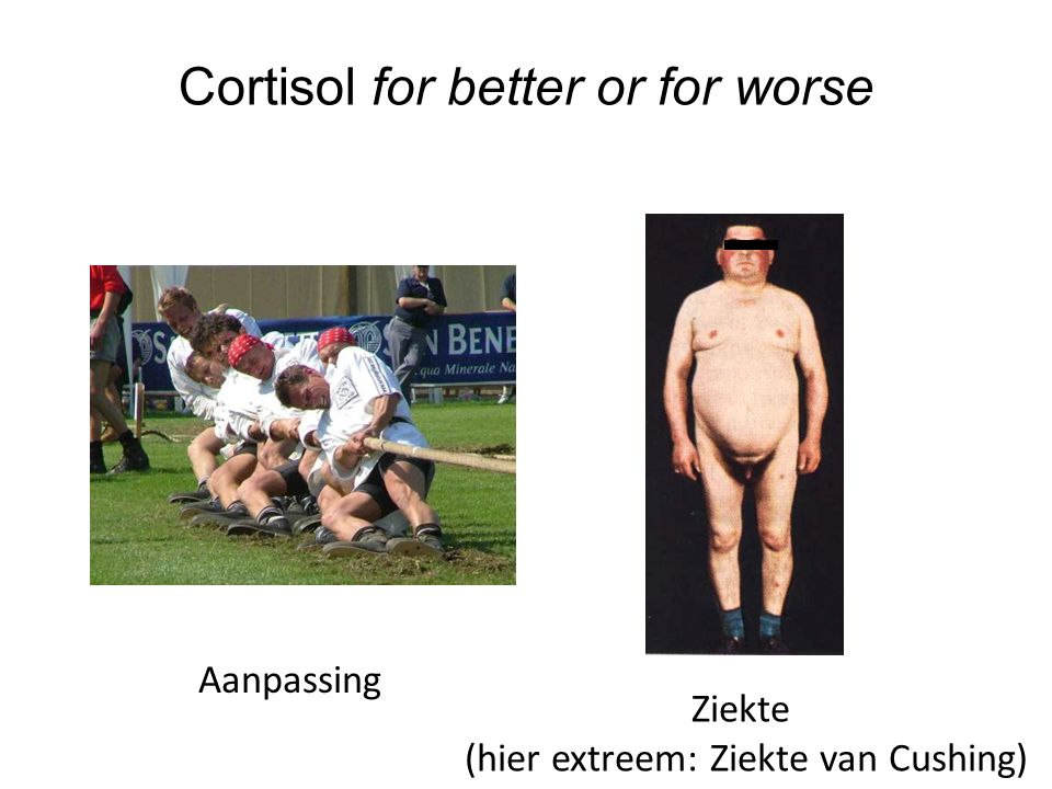Cortisol for better or for worse