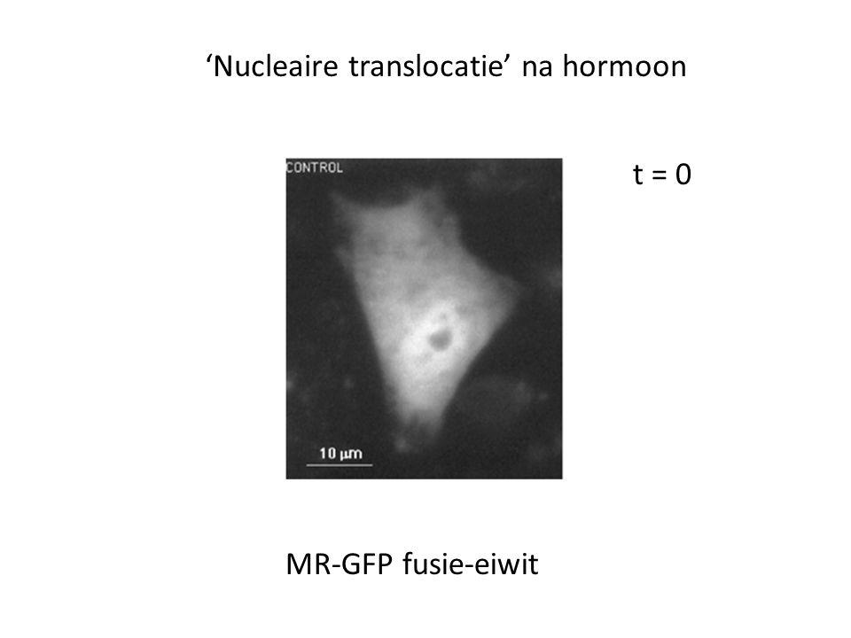 'Nucleaire translocatie' na hormoon