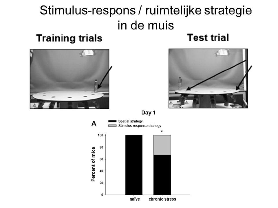 Stimulus-respons / ruimtelijke strategie in de muis