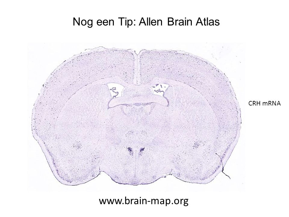 Nog een Tip: Allen Brain Atlas