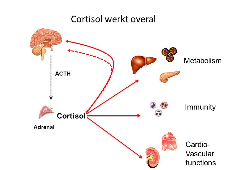 Cortisol werkt overal Metabolism Immunity Cortisol Cardio- Vascular