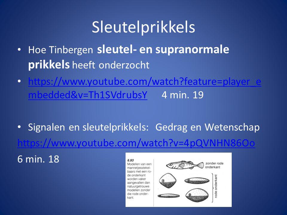 Sleutelprikkels Hoe Tinbergen sleutel- en supranormale prikkels heeft onderzocht.