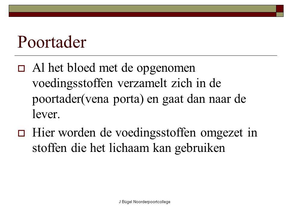 J Bügel Noorderpoortcollege