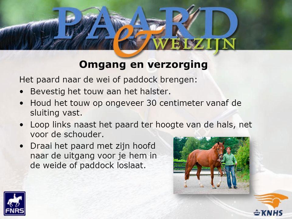 Omgang en verzorging Het paard naar de wei of paddock brengen: