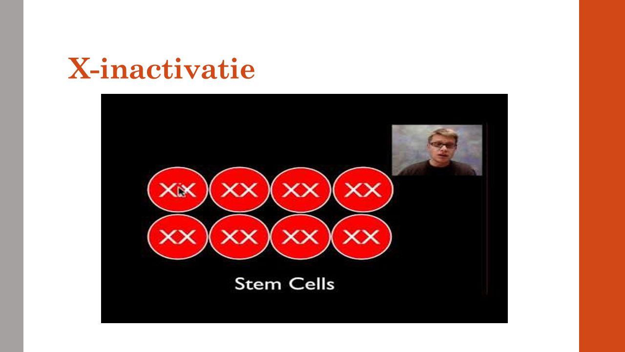 X-inactivatie