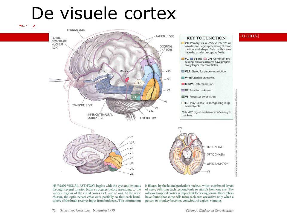 De visuele cortex