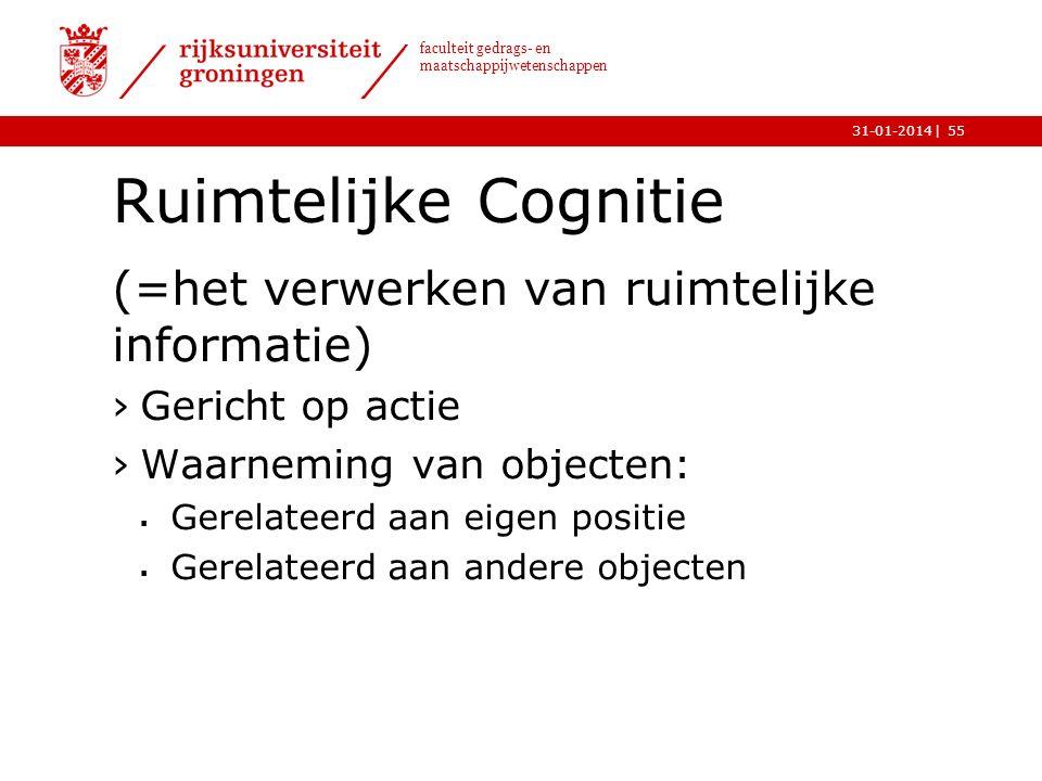 Ruimtelijke Cognitie (=het verwerken van ruimtelijke informatie)