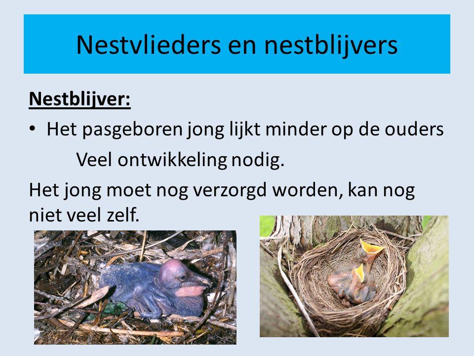 Nestvlieders en nestblijvers