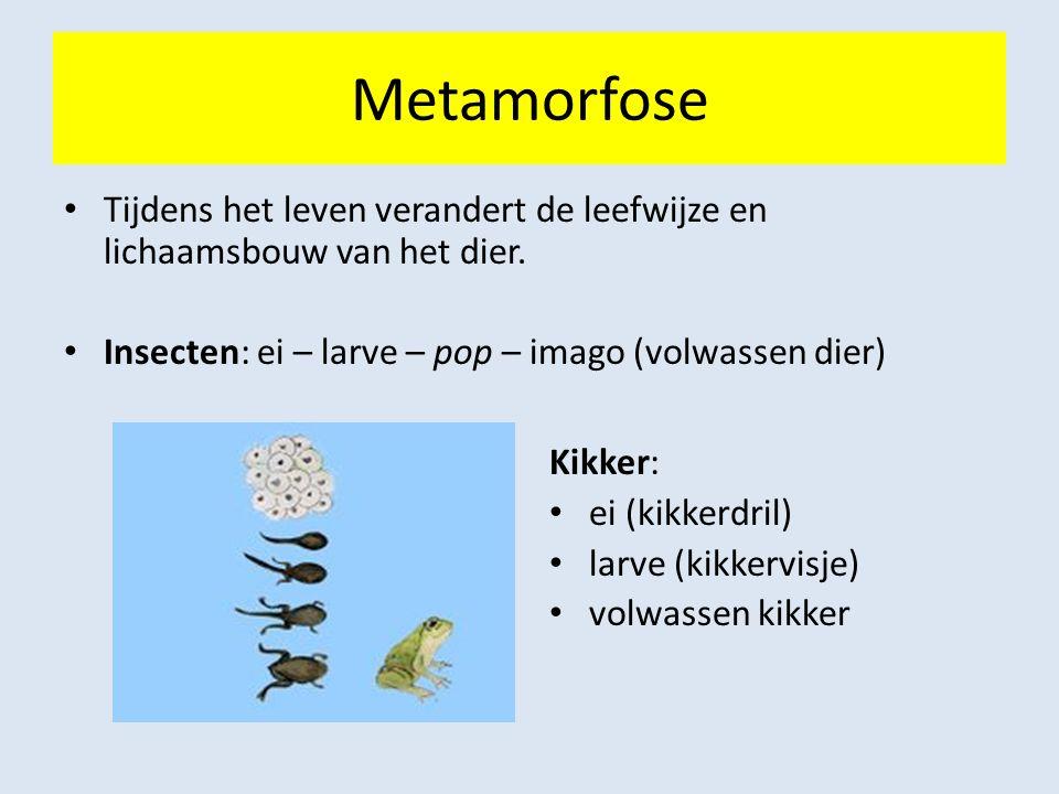 Metamorfose Tijdens het leven verandert de leefwijze en lichaamsbouw van het dier. Insecten: ei – larve – pop – imago (volwassen dier)