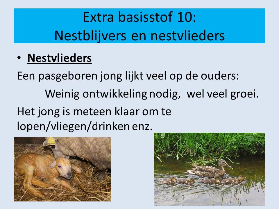 Extra basisstof 10: Nestblijvers en nestvlieders