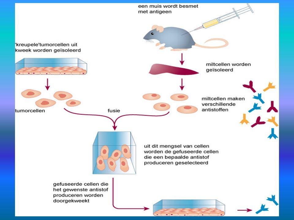 21.7.3 Monoklonale antistoffen 2
