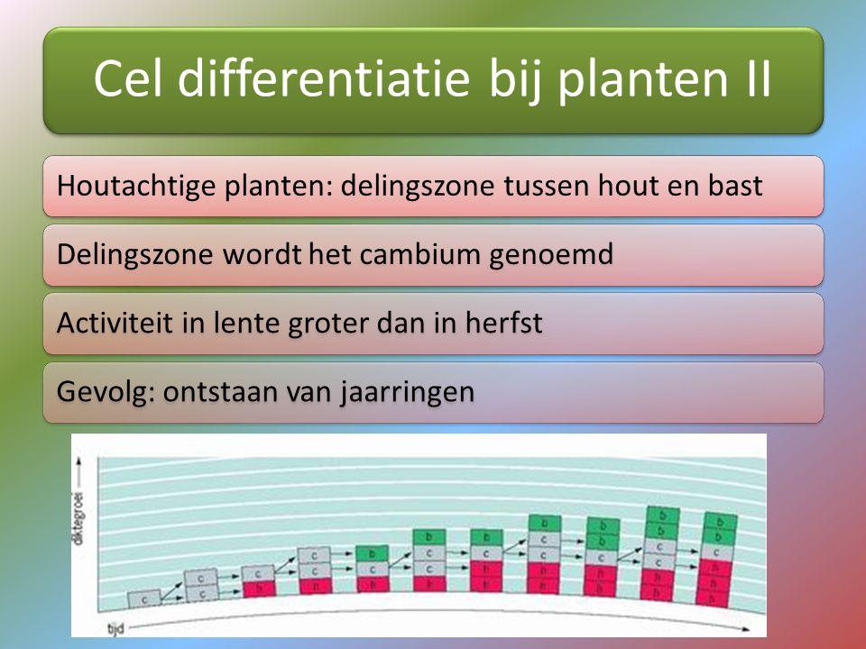 Cel differentiatie bij planten II