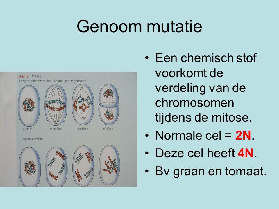 Genoom mutatie Een chemisch stof voorkomt de verdeling van de chromosomen tijdens de mitose. Normale cel = 2N.