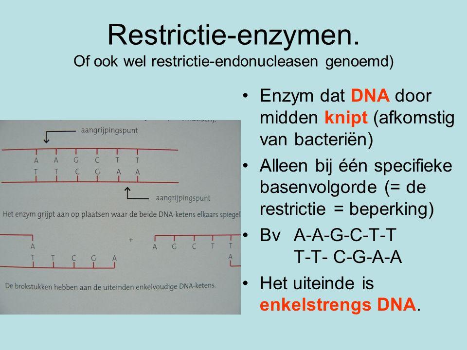 Restrictie-enzymen. Of ook wel restrictie-endonucleasen genoemd)