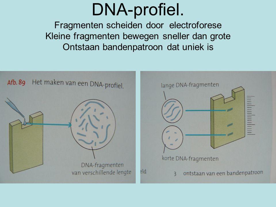 DNA-profiel.