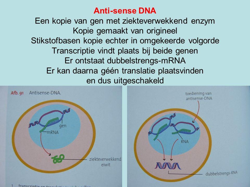 Anti-sense DNA Een kopie van gen met ziekteverwekkend enzym Kopie gemaakt van origineel Stikstofbasen kopie echter in omgekeerde volgorde Transcriptie vindt plaats bij beide genen Er ontstaat dubbelstrengs-mRNA Er kan daarna géén translatie plaatsvinden en dus uitgeschakeld