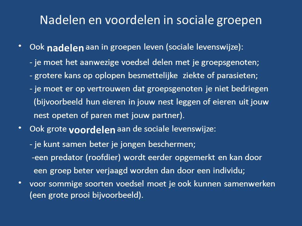 Nadelen en voordelen in sociale groepen